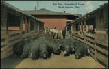 Hog pens, Union Stock Yards, South Omaha, Neb.